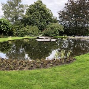 Vijver-met-waterplanten-in-Rhenen